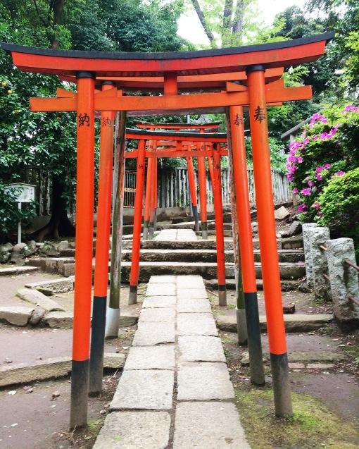 I torii del tempio di Nezu