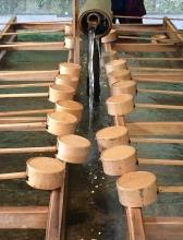 La purificazione al Meji Jingu